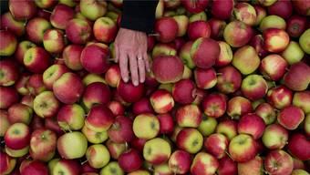 Apfel mit Frostschaden: Im April 2017 wurden die Schweizer Apfelbauern von einer Kältewelle getroffen.