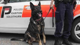 Ein Polizeihund wurde bei der Durchsuchung eingesetzt. (Archiv)