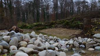 Renaturierung ARA Schinznach-Bad