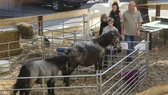Das Ponyreiten auf dem Petersplatz ist abgeblasen – die Basler Tierschützer bezeichnen das als Erfolg. (Symbolbild)