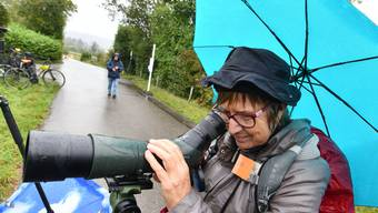 Birdwatch in Riehen 2019