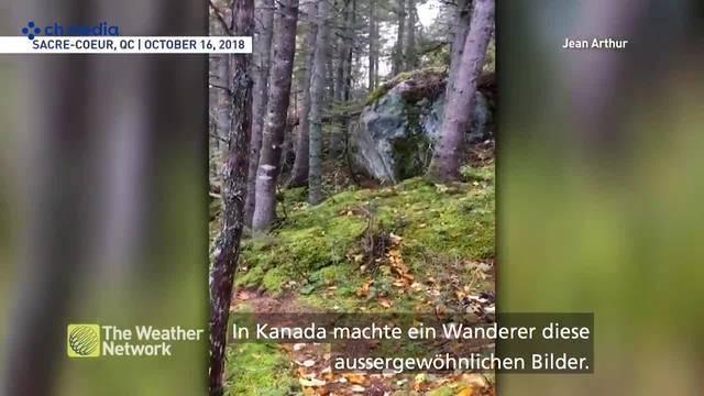 Atmet dieser Waldboden etwa?