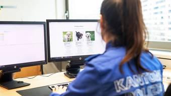 Online einen Welpen kaufen? Sowieso keine gute Idee. Corina Winkler, Mediensprecherin der Kantonspolizei Aargau zeigt einen typischen betrügerischen Onlineshop, auf dem man nur per Vorkasse bezahlen kann.  Aufgenommen am 16.12.2020