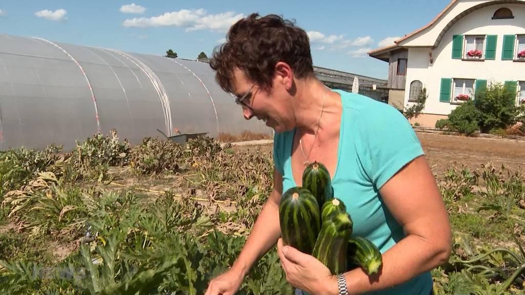 Gemüse-Diebe stehlen Ernte vom Feld