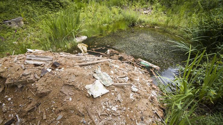 Der illegal deponierte Baumüll in Sissach bedroht seltene Tierarten wie den «Glögglifrosch» in ihrem Lebensraum.