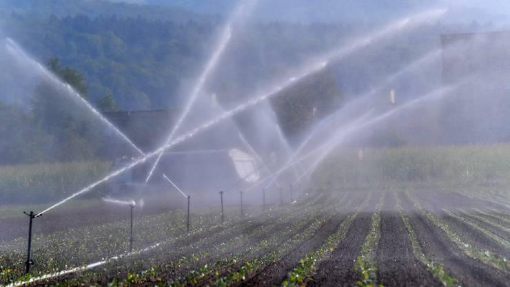 Um ihre Felder zu bewässern, wollen Bauern bei Dürre das Grundwasser anzapfen.