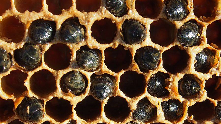 Jedes 8. Bienenvolk hat den Winter nicht überlebt – jetzt will das Parlament handeln
