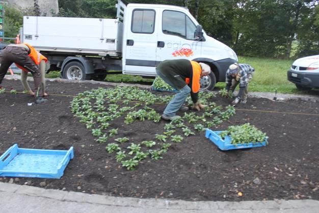 Die Stadt Grenchen beteiligt sich zusammen mit über 400 Gemeinden an der Bepflanzungsaktion für die Opfer von Brustkrebs