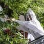 Bienen auf dem Barfi