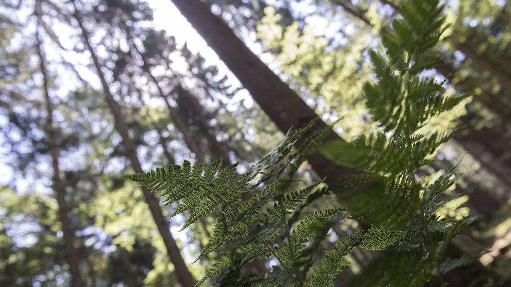 Neben den alten wurden bereits neue Bäume eingepflanzt
