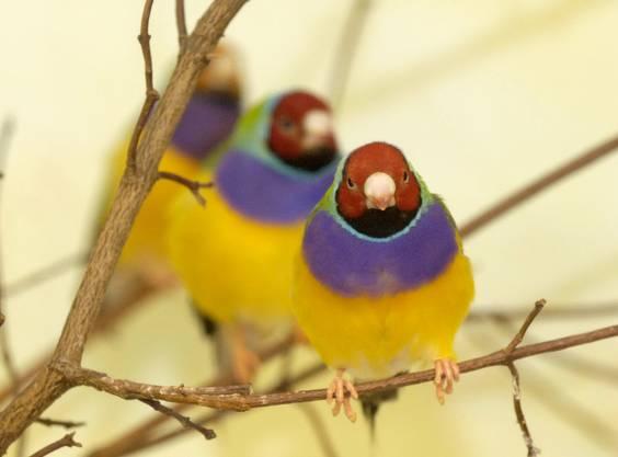 Vögel: Im Vogelhaus sowie im Etoschahaus hätten die Tiere die Möglichkeit, sich natürlich fortzubewegen und zu fliegen. Bedingung dafür sei, dass relativ kleine Vogelarten gehalten würden.