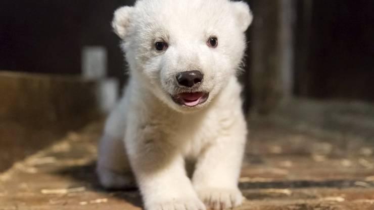 Der kleine Eisbär Fritz ist im Alter von vier Monaten gestorben