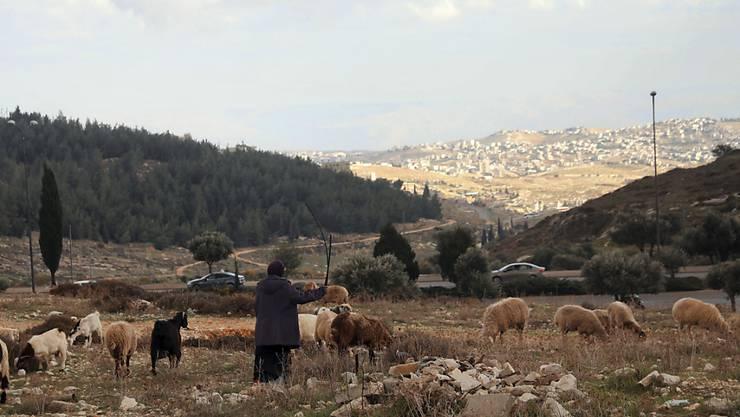 Israel treibt Pläne zum Bau von mehr als 1200 weiteren Wohnungen im annektierten Ost-Jerusalem voran. Dieser Hügel auf dem der palästinensische Hirte mit seiner Herde steht, ist Teil des Gebiets. Foto: Mahmoud Illean/AP/dpa