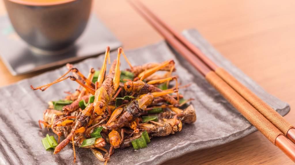 Best Practice_Ochsebei kocht Insekten