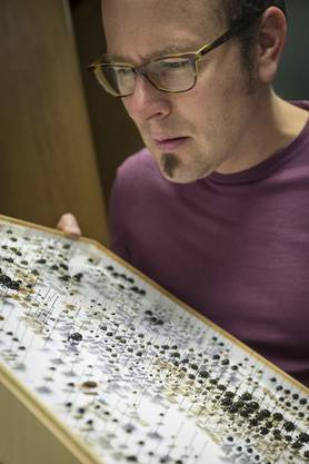 Er ist verantwortlich für die Wirbellosen-Sammlung.