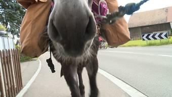 10 Wochen, 20Kilometer pro Tag: Sommerferien mit Esel