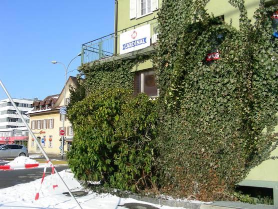 Das grüne «Neuhaus» im grünen Pflanzen-Kleid.