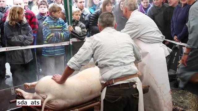 """Öffentliche """"Hausmetzgete"""" zweier Schweine in Sissach"""