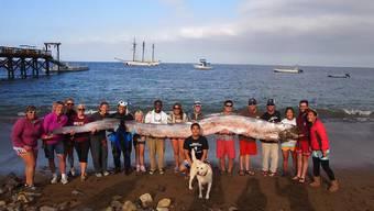 Seeungetüm vor kalifornischer Küste entdeckt