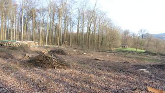Forstrevier Schauenburg