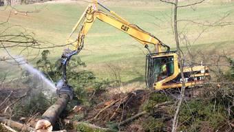 Zwei Drittel der Bäume werden in der Sagenmülihalde gefällt
