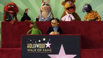 """Ein Stern für """"Die Muppets"""""""
