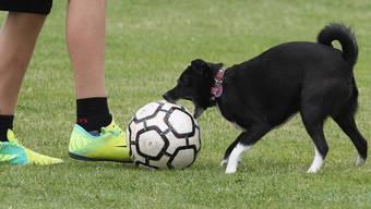 Es ist zwar schön, ganz oft den Ball zu haben und mit ihm zu spielen. Eine Garantie, auf diese Art dann eine Partie auch zu gewinnen, ist dies allerdings noch lange nicht.