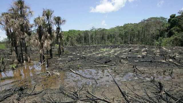 Ein Beispiel illegaler Brandrodung in Peru nahe der brasilianischen Grenze