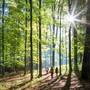 Bald kann man Aussagen zu der Veränderung des Waldes über die vergangenen 15 Jahre machen.