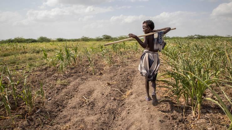 Ein Junge bei der Arbeit auf einem Landwirtschaftsfeld