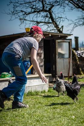 Die Hühner sind sich die Kinder gewöhnt.
