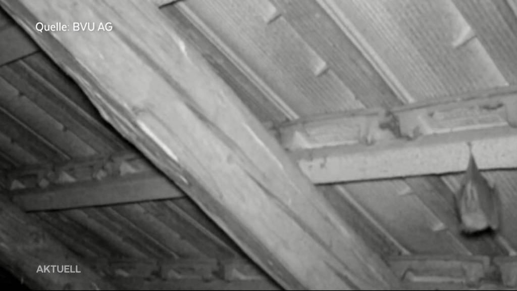 Ein Haus für Fledermäuse