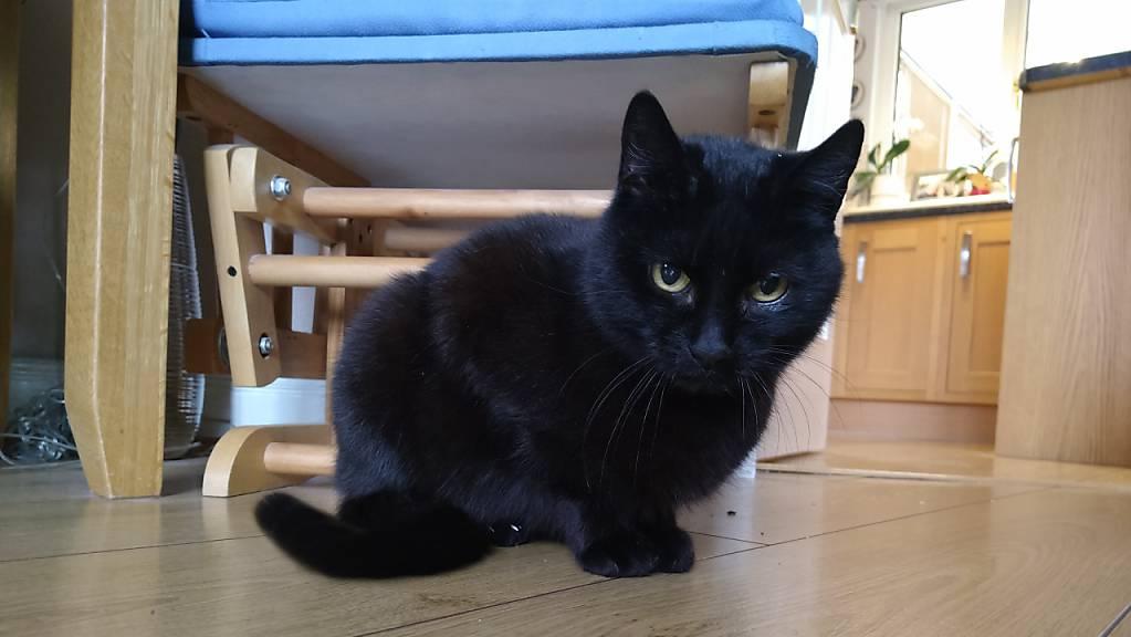 HANDOUT - Die Katze Bella verschwand vor fast vier Jahren aus ihrem Zuhause in Dunfermline. Foto: Scottish Spca/PA Media/dpa - ACHTUNG: Nur zur redaktionellen Verwendung im Zusammenhang mit einer Berichterstattung über das Wiedersehen der Katze Bella mit ihrer Familieund nur mit vollständiger Nennung des vorstehenden Credits
