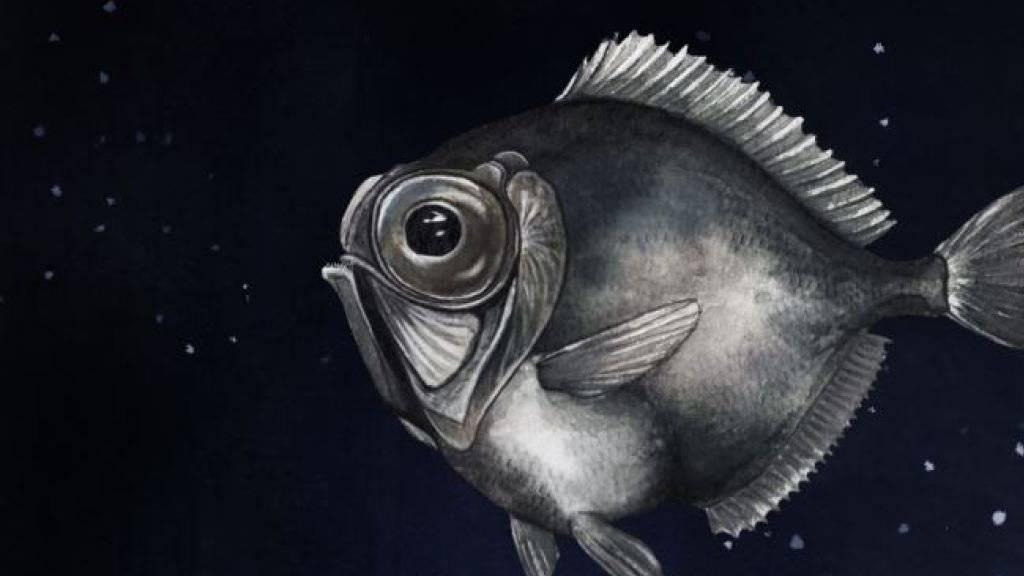 Der Silberkopf Diretmus argenteus lebt in der Tiefsee. Seine Strategie, in der fast absoluten Dunkelheit Farben zu sehen, erstaunt Forschende. (Illustration)