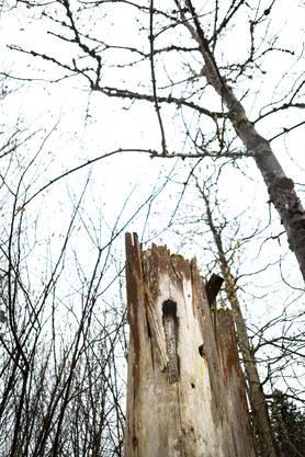 So verheerend es im Dietiker Wald einst aussah, so war der Schaden quasi «nur» in Franken zu beziffern. Die Natur fand ihren eigenen Weg.