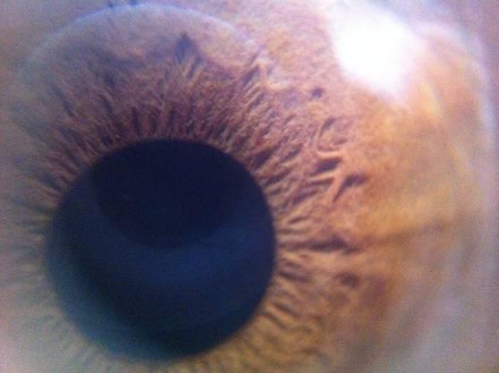 Die Iris eines menschlichen Auges.