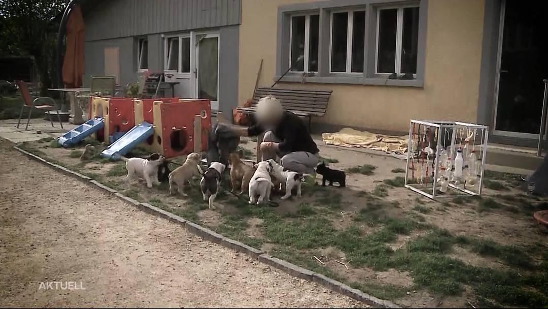 Nach Beissattacken: Razzia bei Hundezüchterin