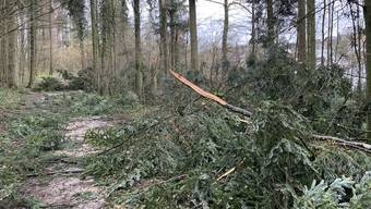 Einige Strassen im Egliswiler Wald, wie hier im «Binzenholz», sind derzeit leicht versperrt.