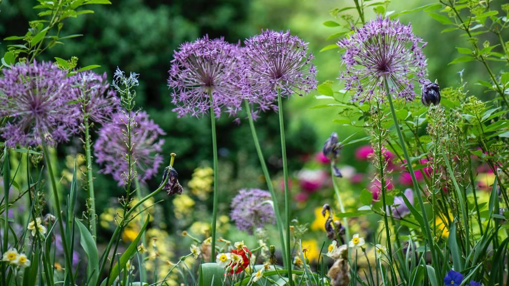 Unsplash Blumen
