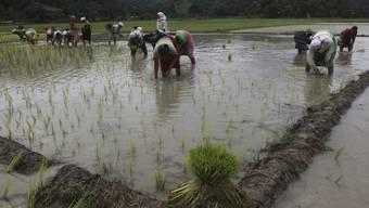 Landbesitzer in Indien erhalten mehr Rechte: Arbeiter in Gauhati