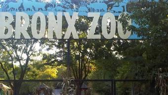 Der Eingang zum Bronx Zoo in New York (Archiv)