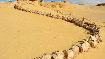 Spektakuläre Urwal-Funde in der ägyptischen Wüste nahe der lybischen Grenze.