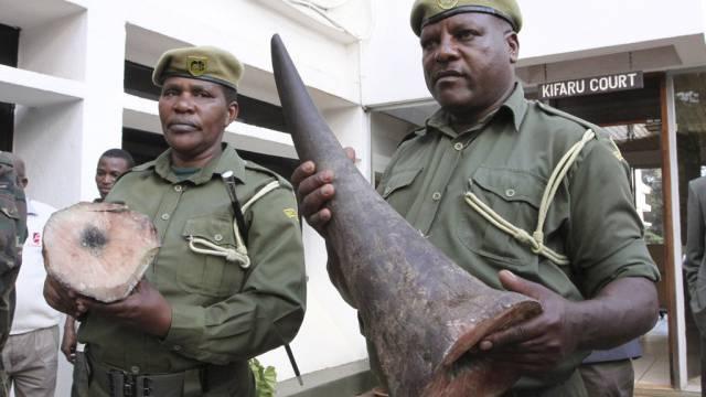 Wildhüter halten am Flughafen in Nairobi konfiszierte Hörner hoch