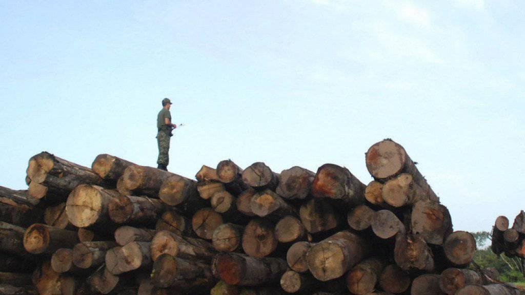 Razzia im brasilianischen Regenwald: Seltene Baumarten werden oft illegal gefällt und teuer im Ausland verkauft (Symbolbild).
