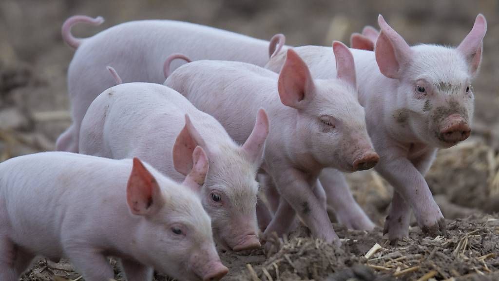 Sorgfalt beim Umgang mit Antibiotika im Veterinärwesen nimmt zu