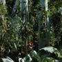 «Was eine jede Pflanze durchmacht, das ist ganz nüchtern betrachtet doch Wahnsinn. Man muss sich nur mal eine Tomatenstaude angucken und daneben das Samenkorn aus dem das Ding gewachsen.»