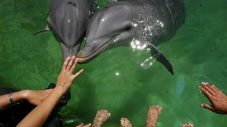 Hotelplan bietet künftig weder Online noch in seinen Katalogen Attraktionen mit in Gefangenschaft lebenden Delphinen und Walen an. Doch Kunden können solche Angebote dennoch buchen, wenn sie gezielt danach fragen. (Symbolbild)