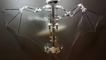 """Der """"Bat Bot"""" hat Flügel aus einer dünnen Silikonmembran und trägt Sensoren und einen Bordcomputer, der die Flugbewegungen in Echtzeit berechnet."""