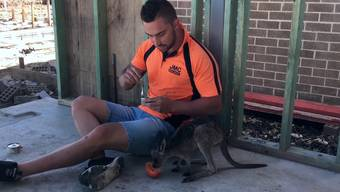 Zum Schmelzen: Ein Tag im Leben von Jackson O'Doherty und Kängurumädchen Damien.