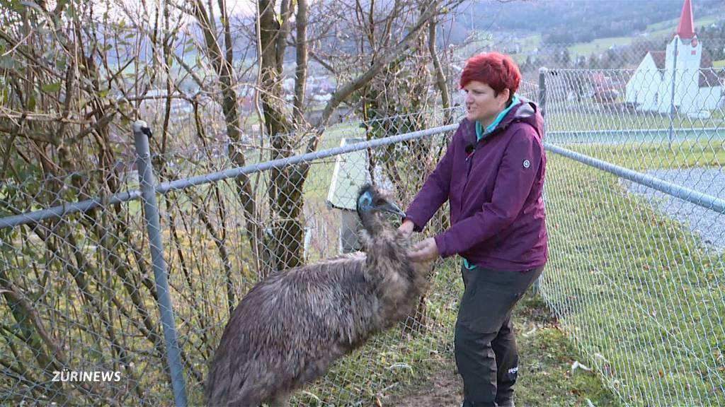 Nach dem Skandal: Ein neues Zuhause für die ERZ-Emus